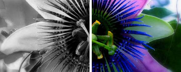 crear imagen en blanco y negro con jQuery