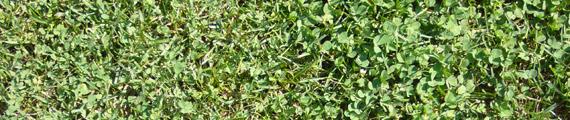 Texturas de hojas