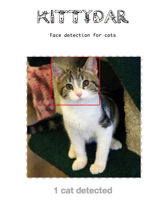 detectar rostros de gatos con javascript