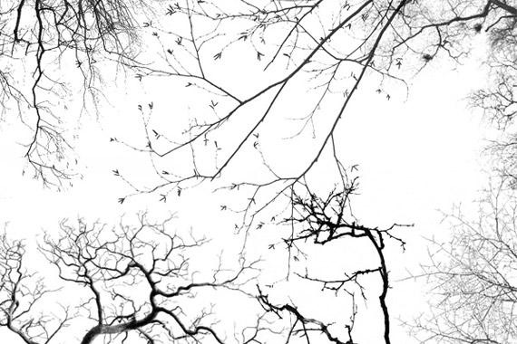Brushes de árboles para esquinas